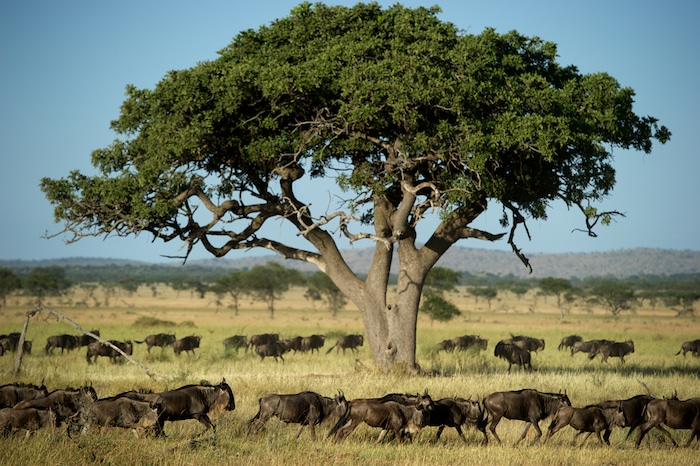 Top 5 African Safari Tours and Travel Trips