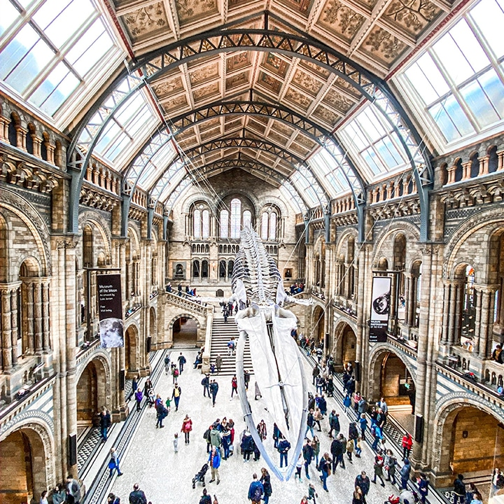 travel from home - virtual travel experiences - natural history museum